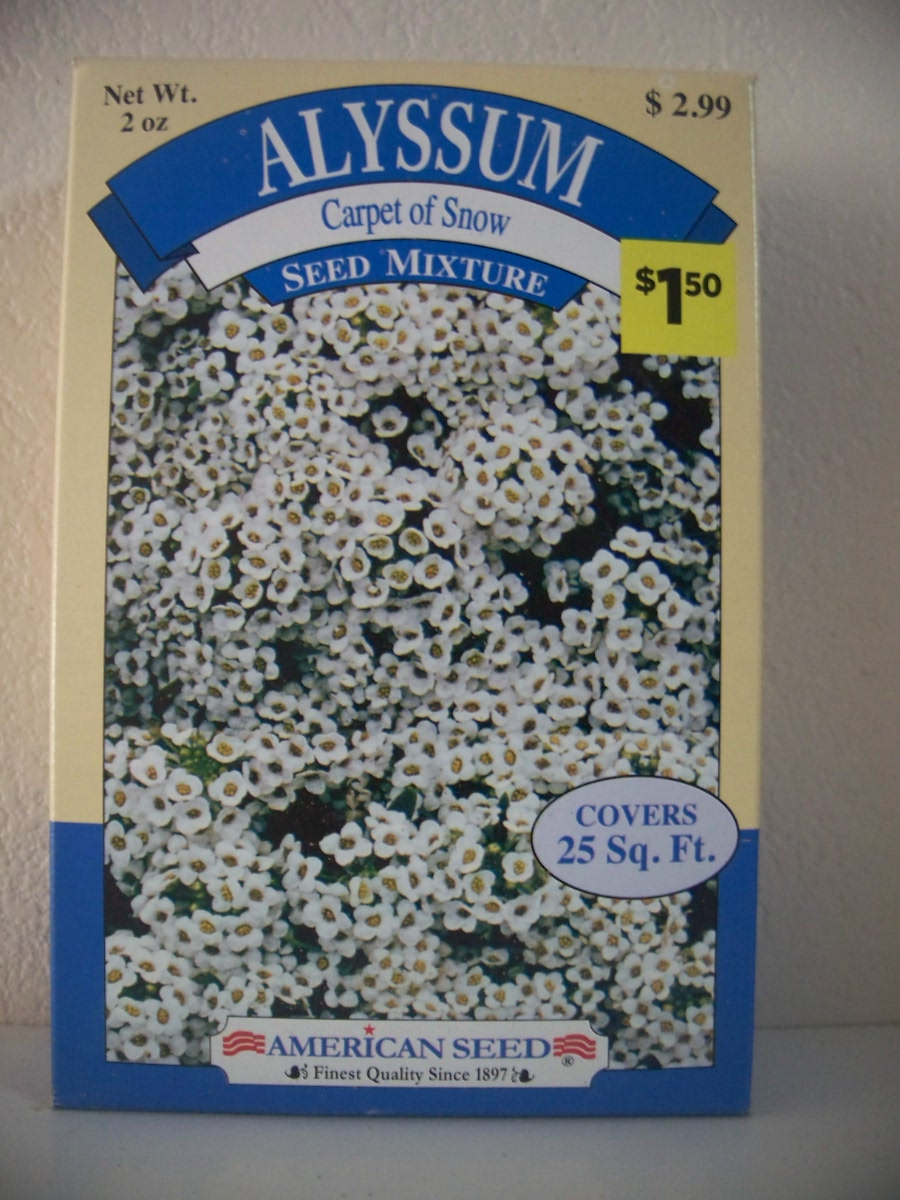 Alyssum Carpet of Snow Seed Mixture by American Seed